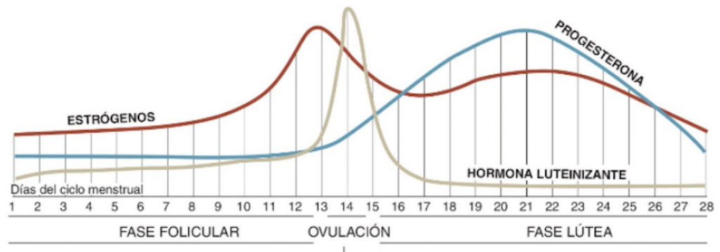 La fluctuación hormonal del ciclo menstrual de la mujer