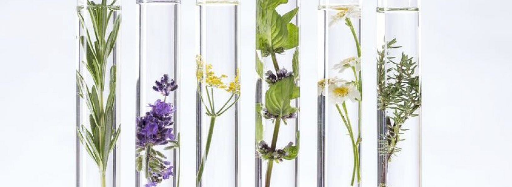 8 alternativas ecológicas y naturales para tu higiene diaria